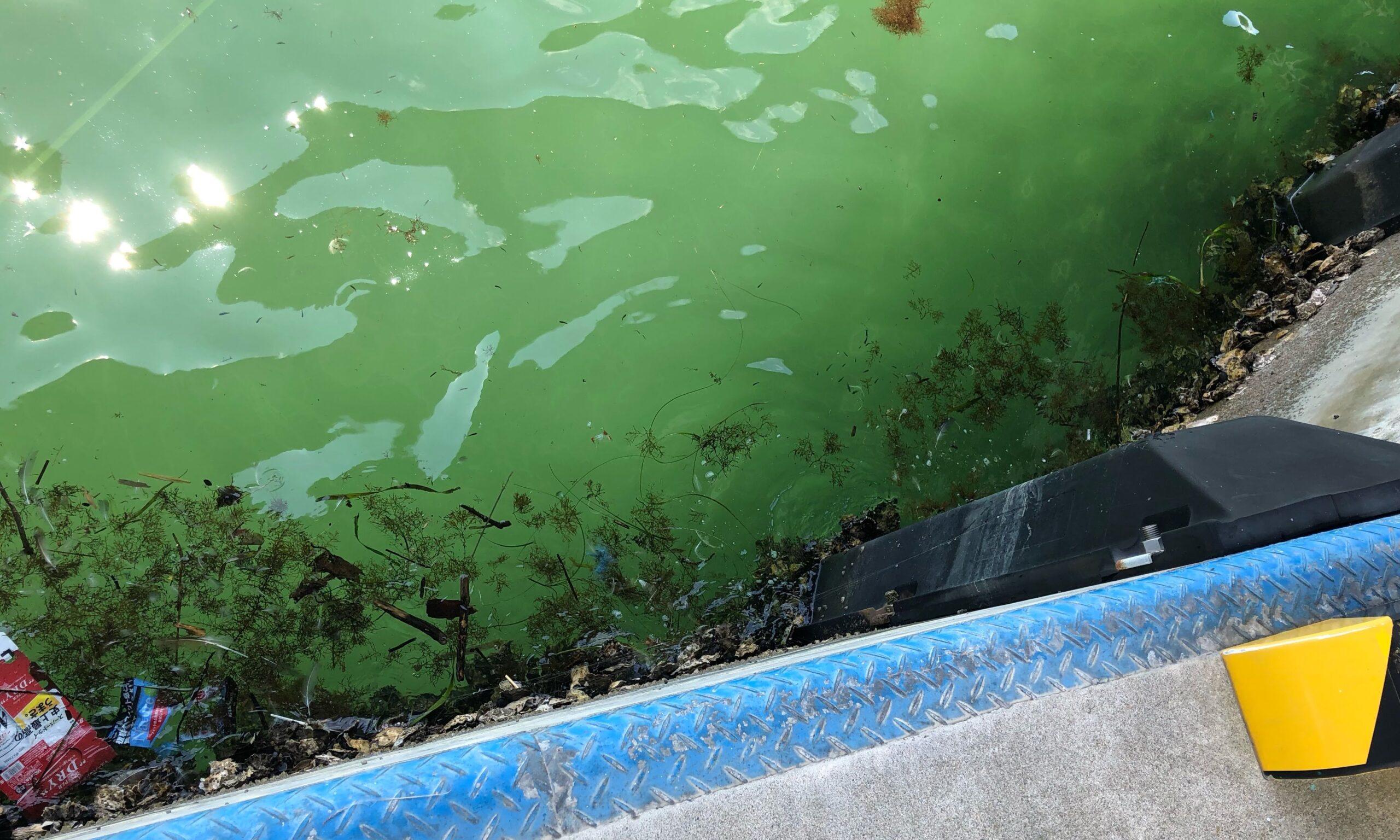 漁港内ゴミ
