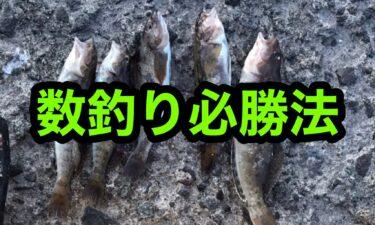 アブラコの数釣り必勝法