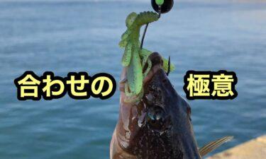 北海道のアブラコ釣り、合わせの極意