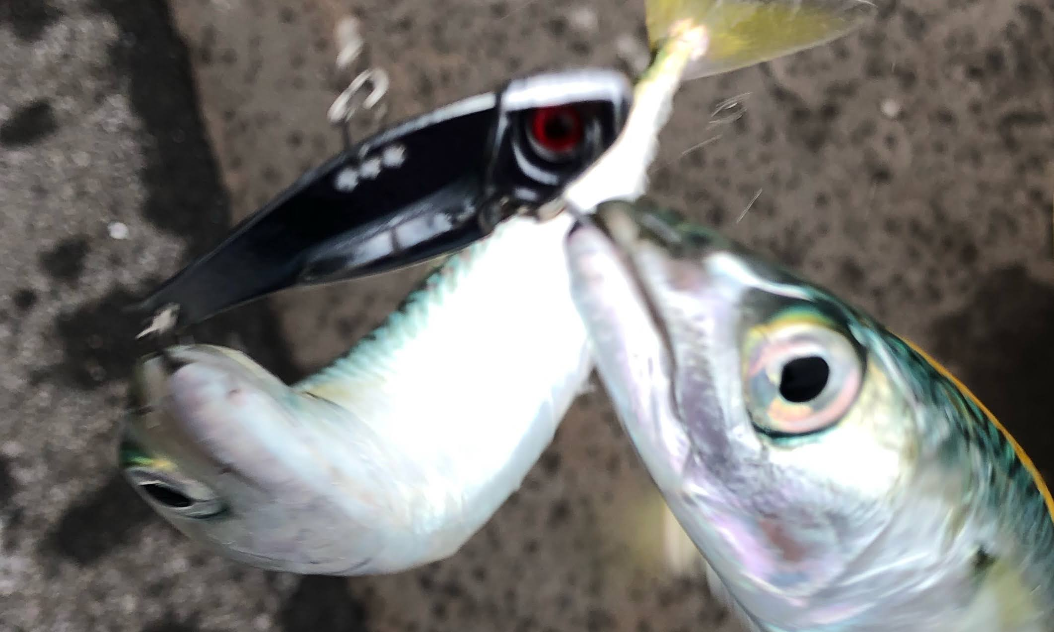 サバ 釣り