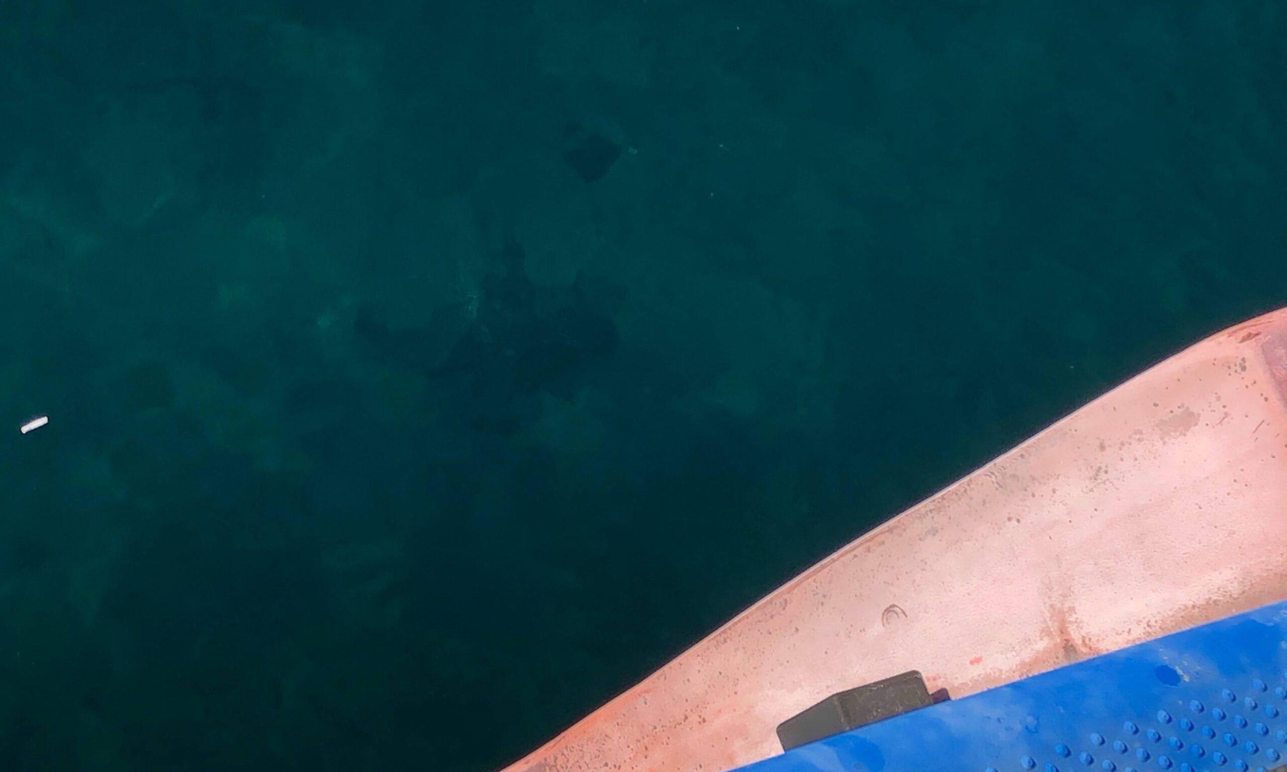 熊石漁港 タコ