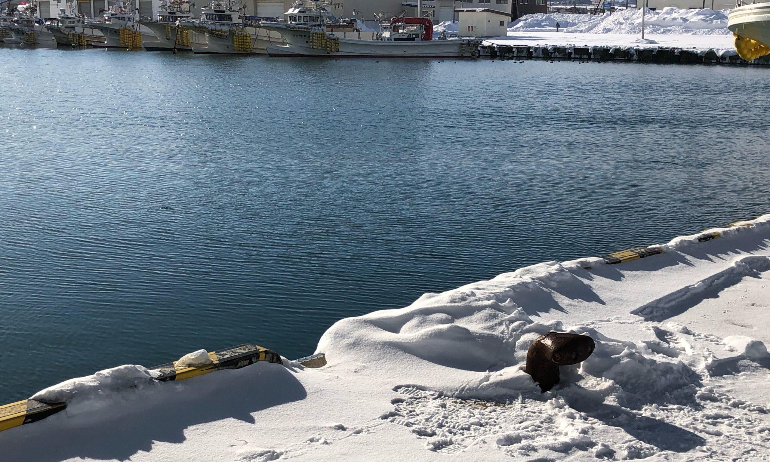 冬の八雲漁港