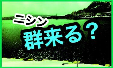 ニシン 群来 小樽 祝津 石狩新港 樽川埠頭 2月 2021年