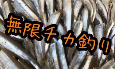 八雲漁港で無限チカ釣り