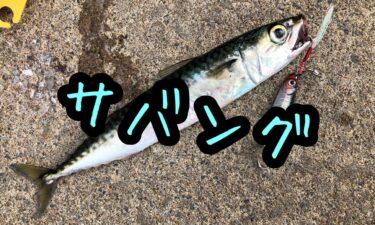 函館港海岸町船溜りでサバ釣り