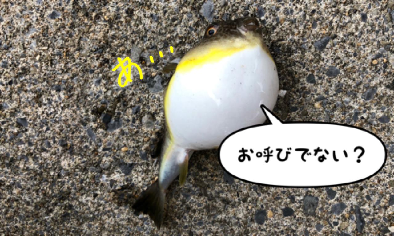 函館港海岸町船溜りでイワシ釣り