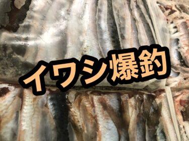 函館港でイワシ鬼爆釣