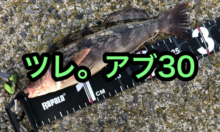 アブラコ30cm