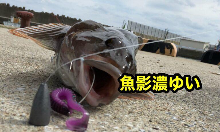 魚影濃ゆい